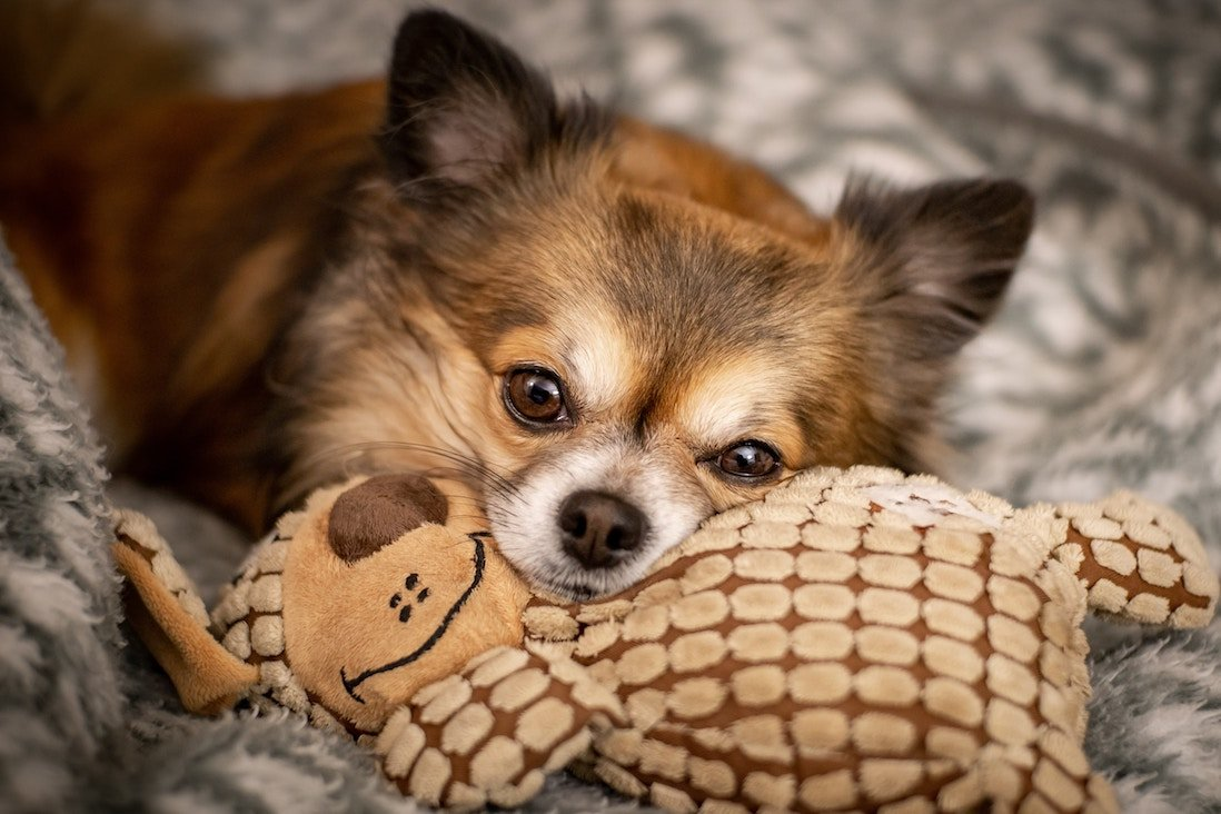 brown short coated dog laying on plush toy