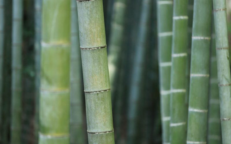 bamboo featured image