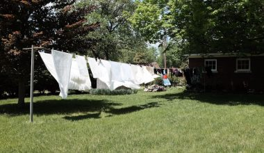 drying in the sun featured image